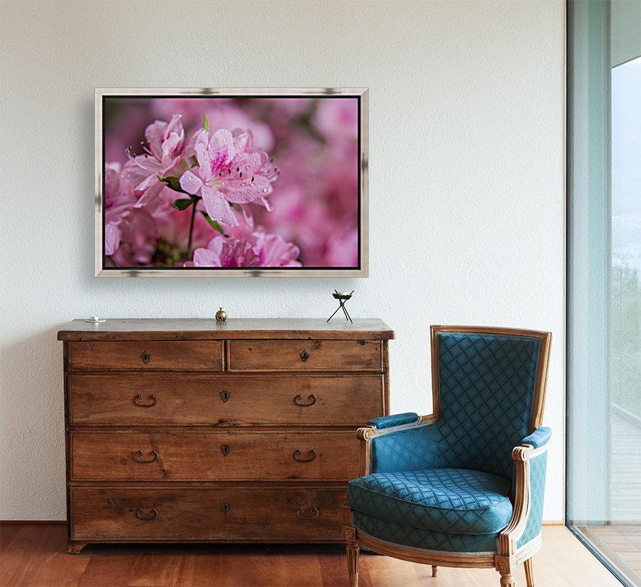 Pericat hybrid azaleas (Mrs. Fisher), Rhododendron (Ericaceae), New York Botanical Garden; New York City, New York, United States of America  Art