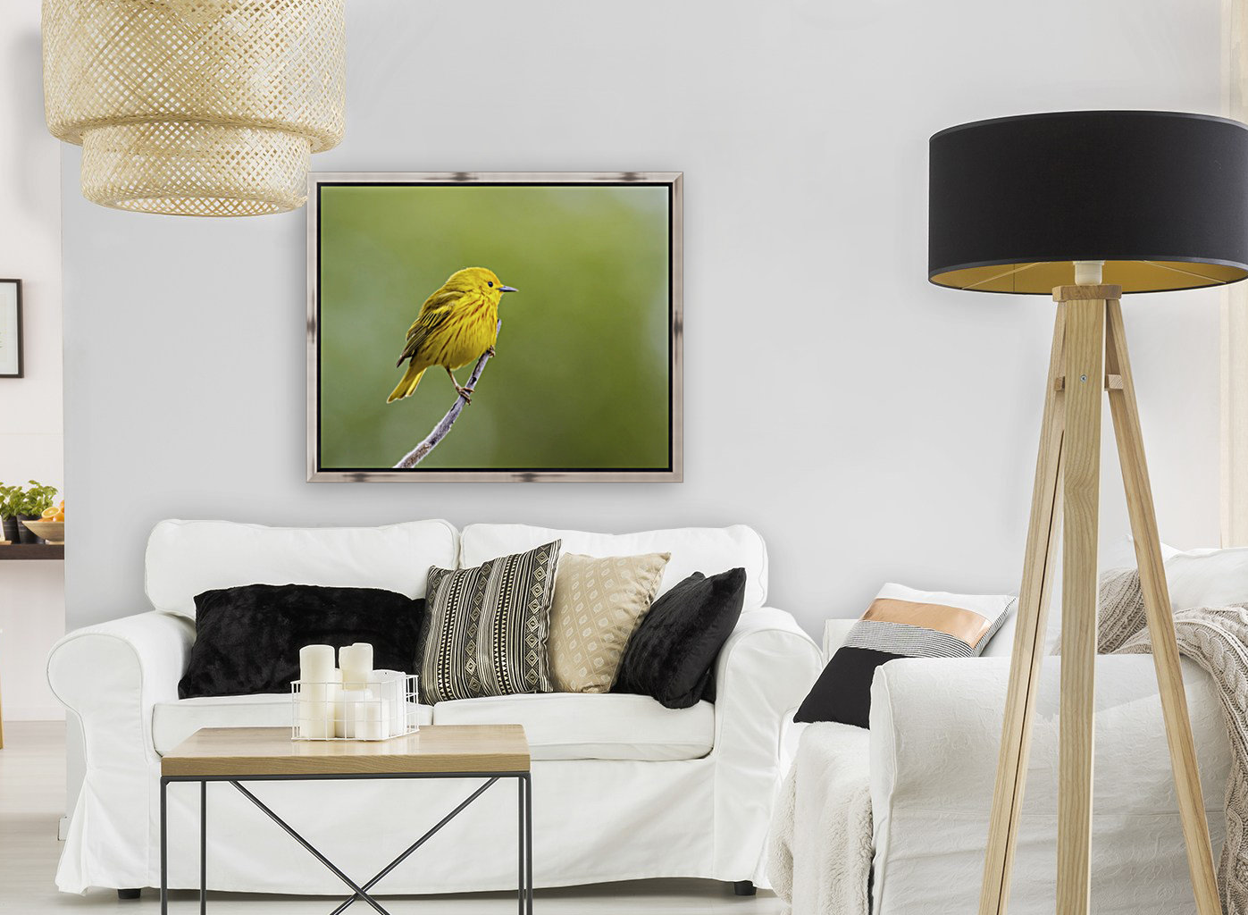 Yellow warbler (Setophaga petechia) perched during spring time; Chateauguay, Quebec, Canada  Art