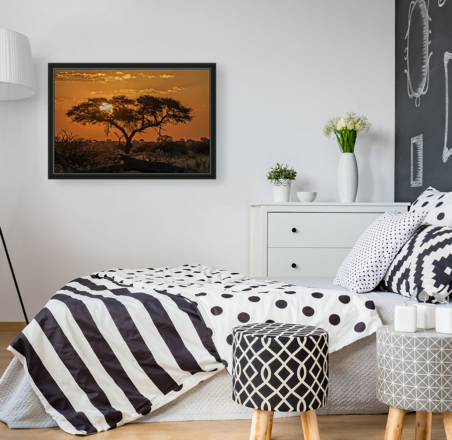 Silhouette of acacia tree at orange sunset; Botswana  Art