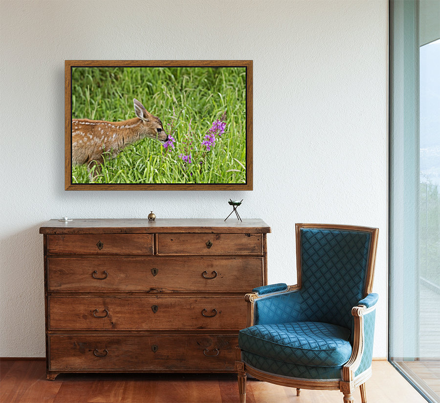 Sitka Black-tailed deer fawn (Odocoileus hemionus sitkensis) munches on fireweed (Chamerion angustifolium) in pasture, captive animal at the Alaska Wildlife Conservation Centre; Portage, Alaska, United States of America  Art
