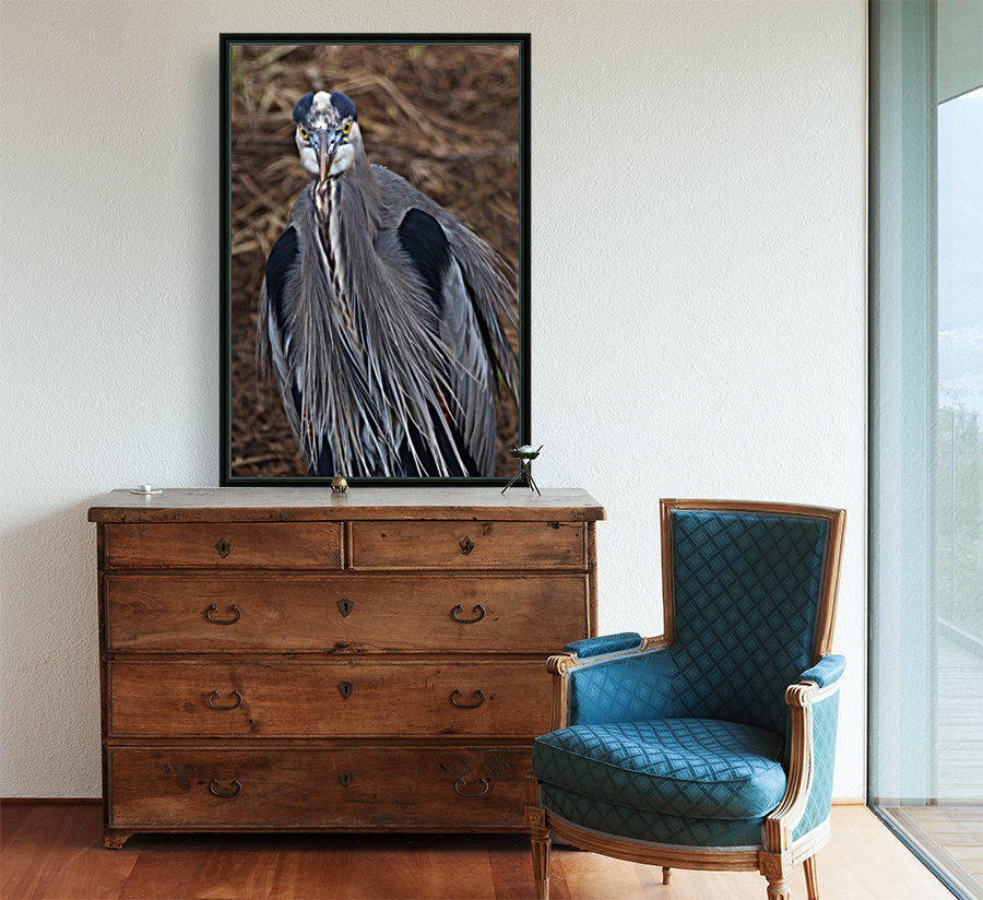 Face on view of great blue heron  Art