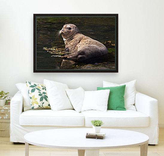 Sea lion posing  Art