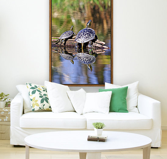 Turtle reflections portrait with Floating Frame