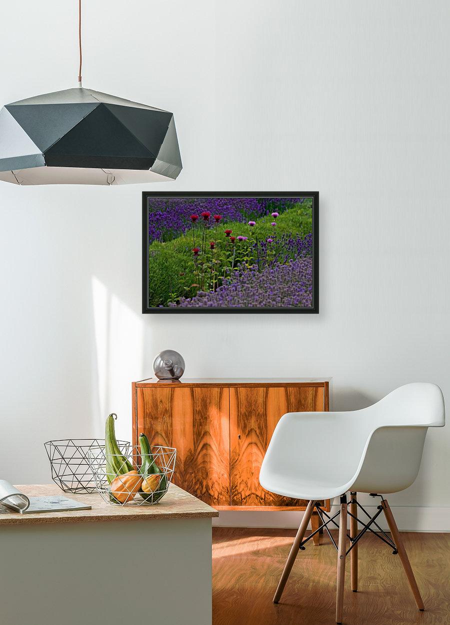 Bee Balm Blooming in Lavender Field  Art