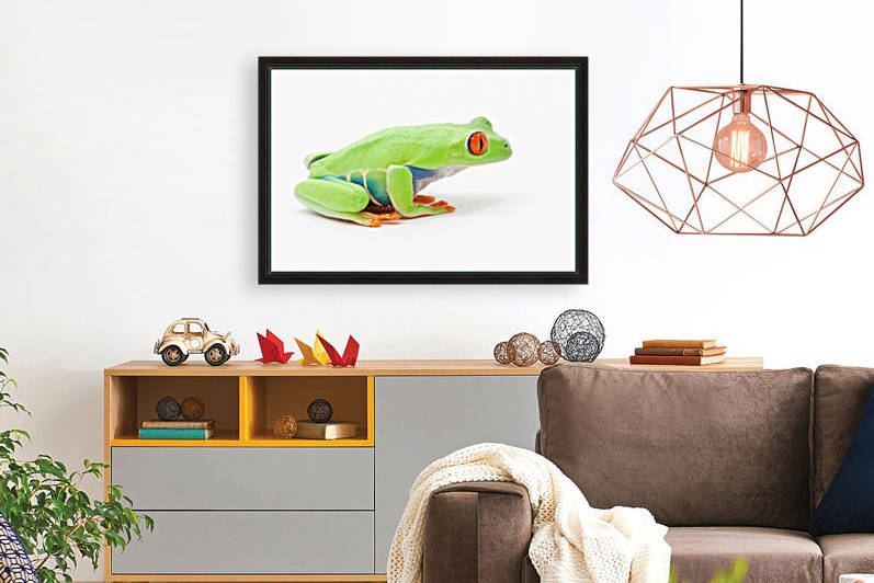 Tree Frog Art Collection