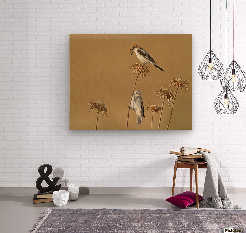 Woodchat Shrike  Wood print