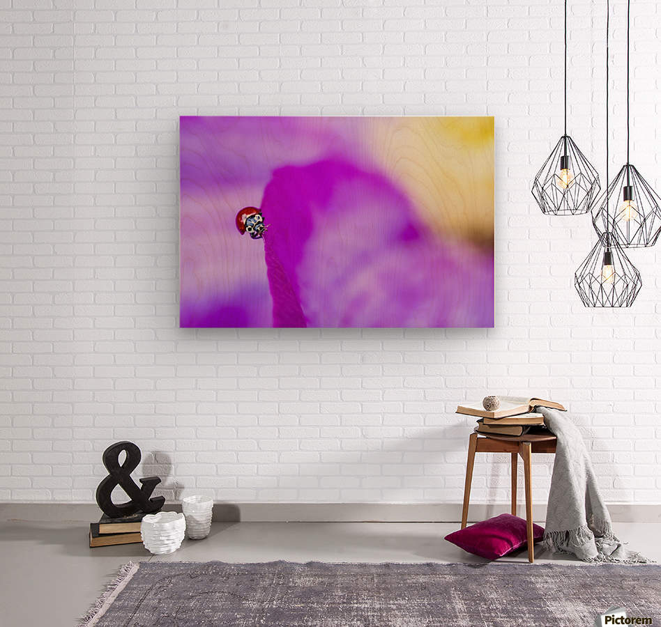 A ladybug on a pink clematis;British columbia canada  Wood print