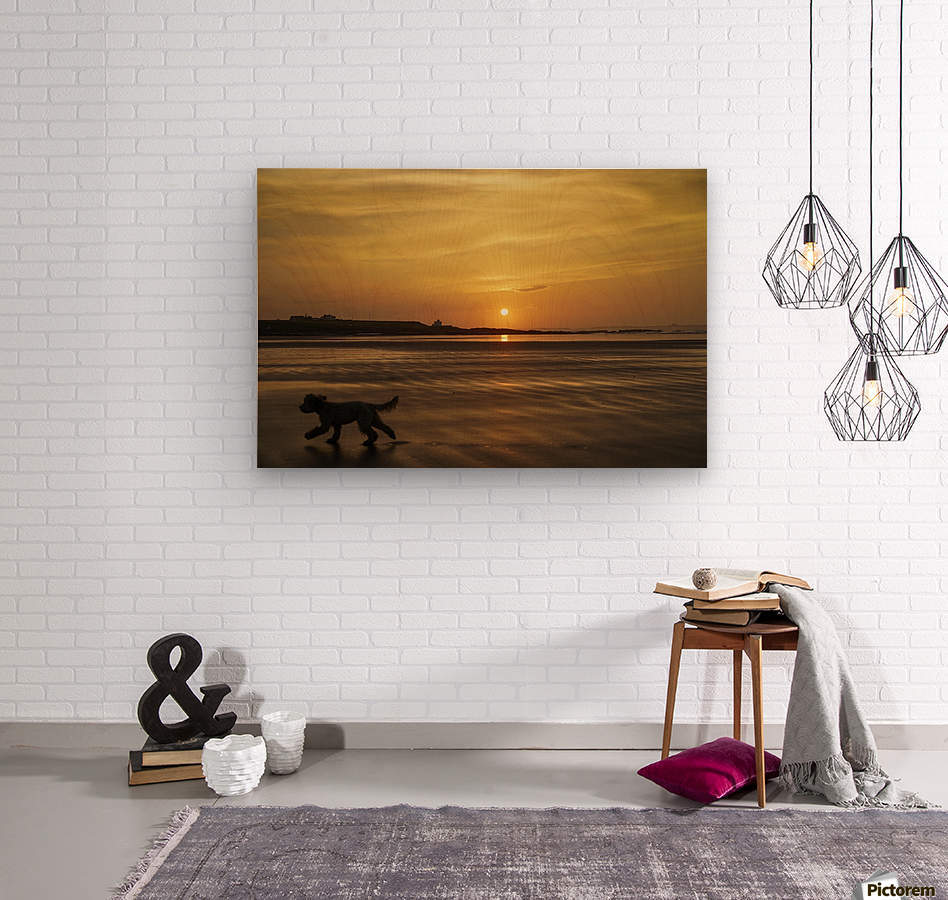 A dog runs across a wet beach with the golden sun setting in an orange sky along the coast and Bamburgh Castle in the distance; Bamburgh, Northumberland, England  Wood print
