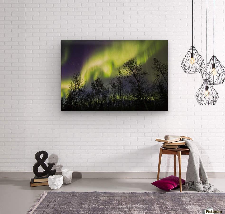 Aurora borealis over silhouetted trees; Alaska, United States of America  Wood print