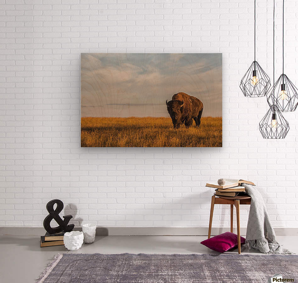 Bison (bison bison), Grasslands National Park; Saskatchewan, Canada  Wood print