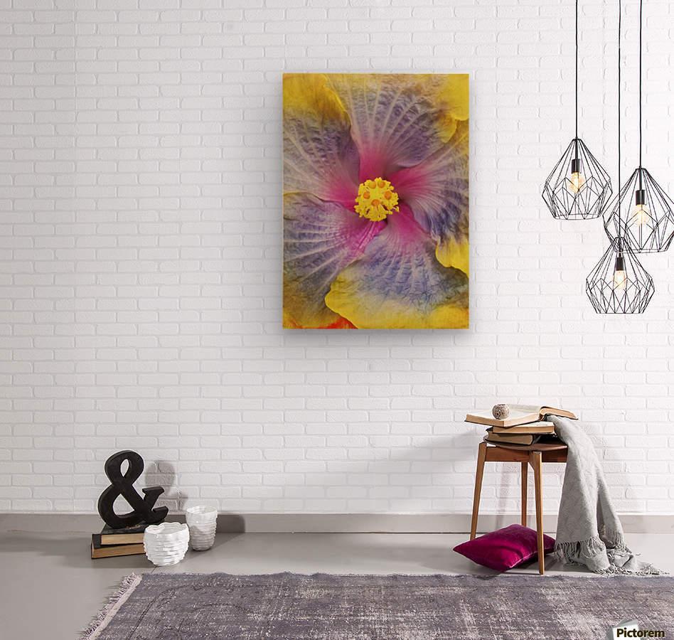 Close-up macro shot of a beautiful lavender, pink and yellow Hibiscus flower; Honolulu, Oahu, Hawaii, United States of America  Wood print