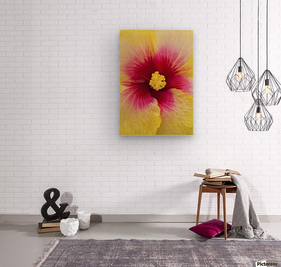 Close-up macro shot of a beautiful red and yellow Hibiscus flower; Honolulu, Oahu, Hawaii, United States of America  Wood print