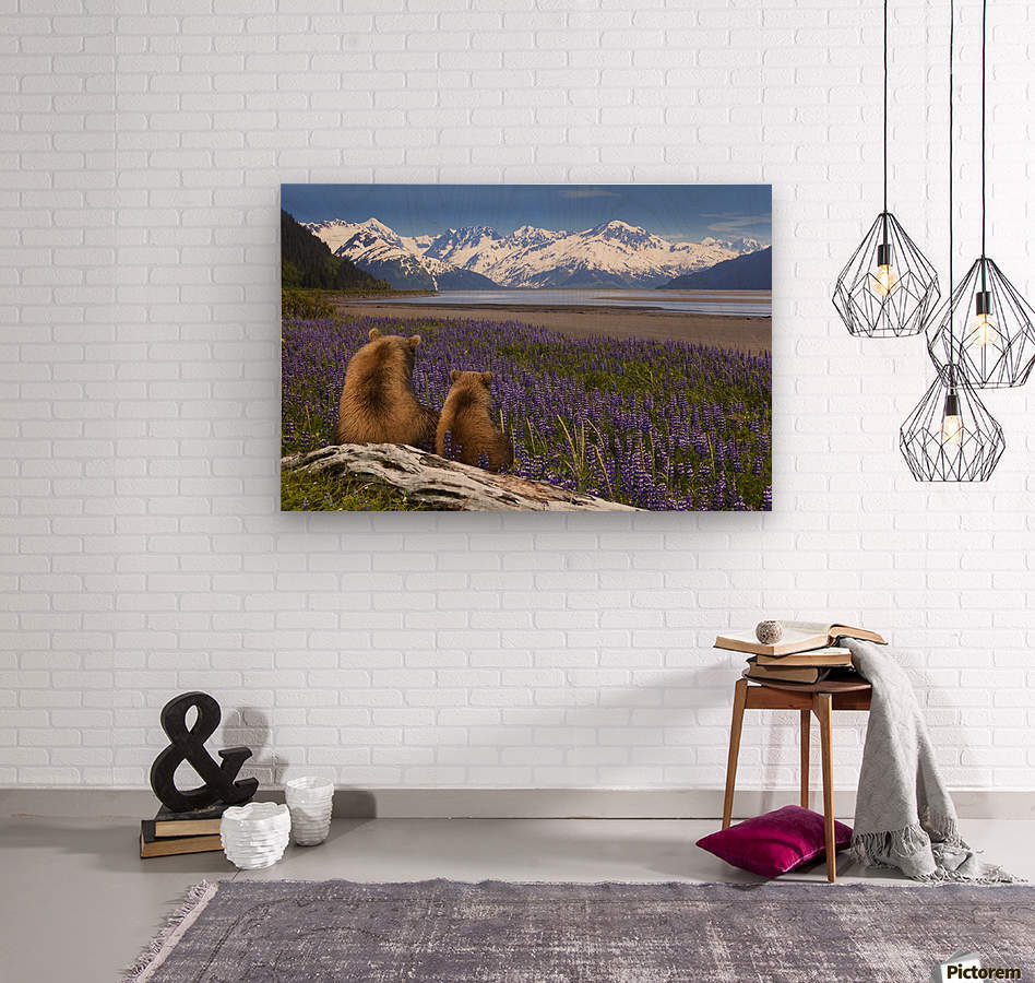 COMPOSITE: Grizzly Sow & cub sit in lupine along Seward Highway, Turnagain Arm, Southcentral Alaska  Wood print