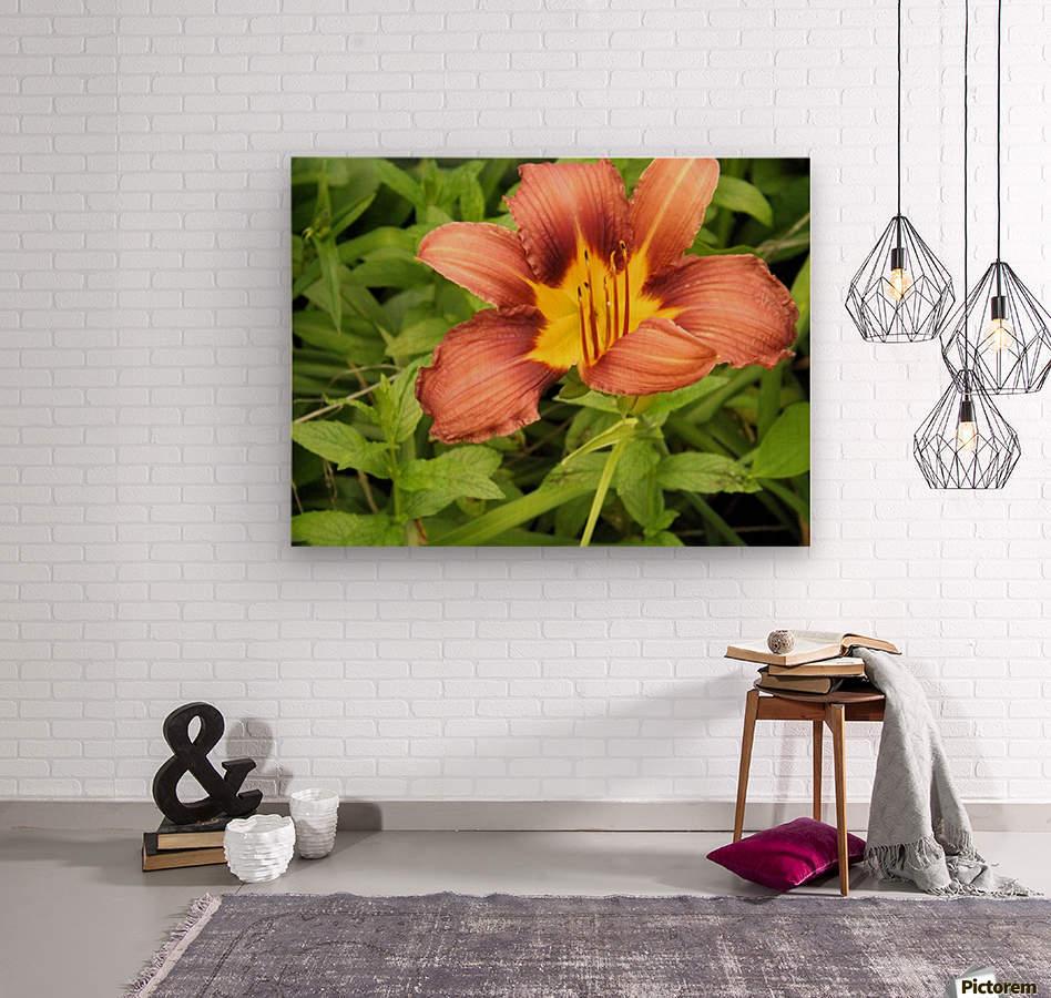 Oranger Lilly 3  Wood print