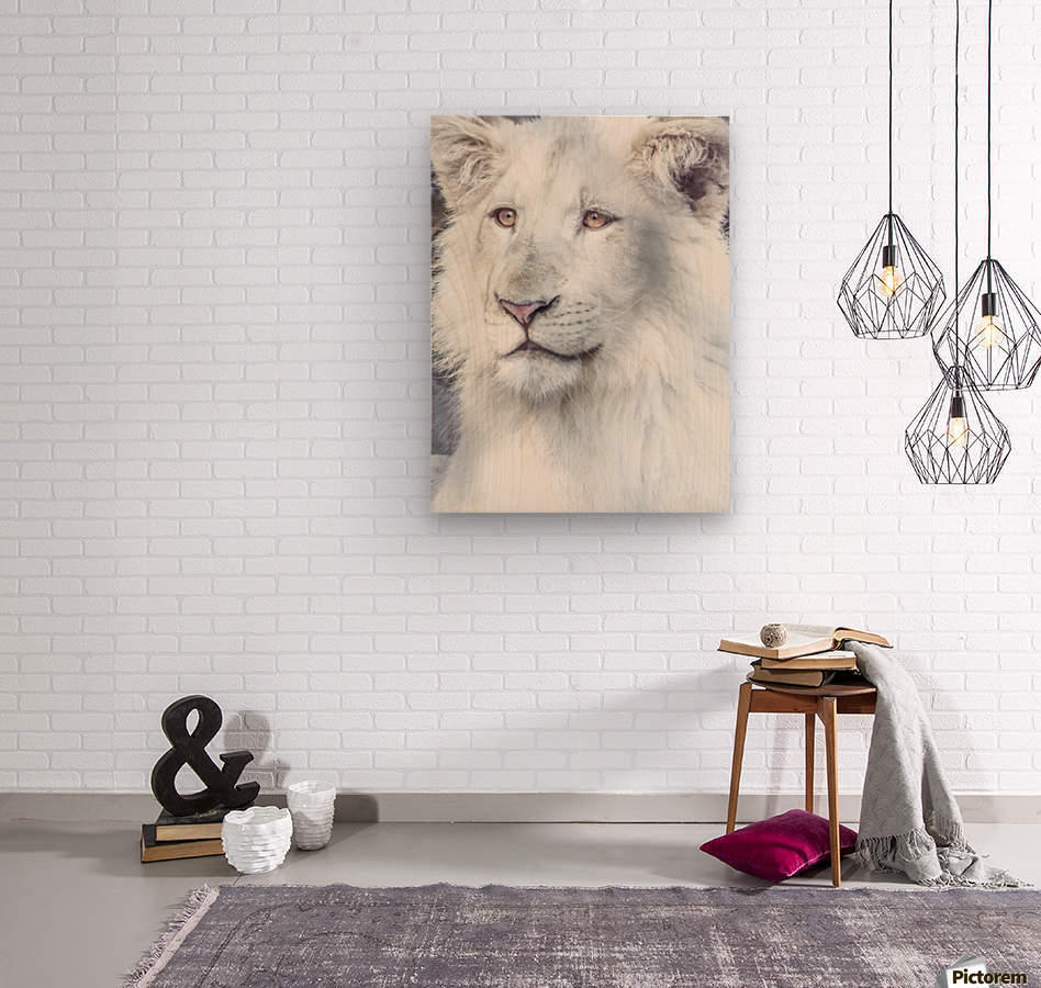 Juvenile White Lion   Wood print