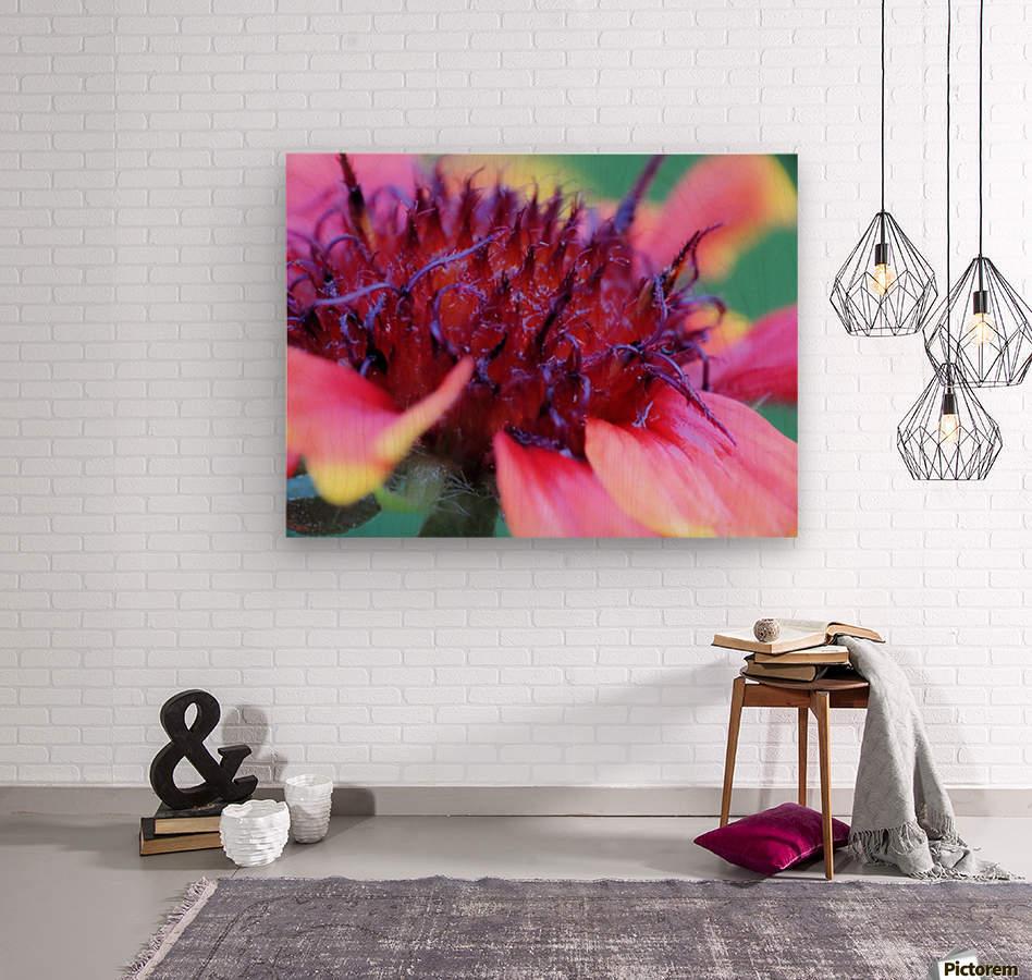 Sun Flower Macro  Wood print