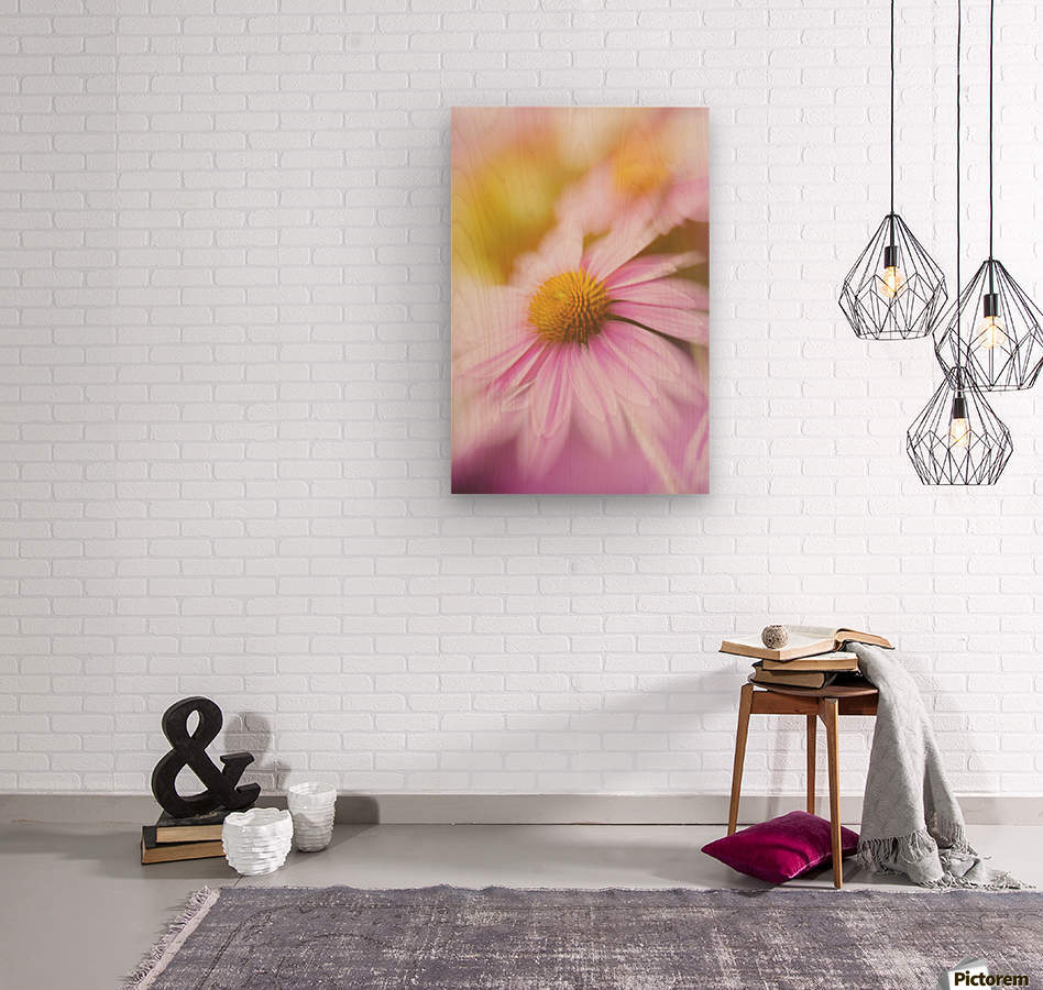 Dreamy Pink Coneflower   Wood print