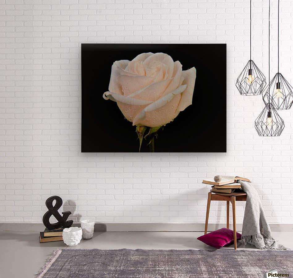 Calming rose  Wood print