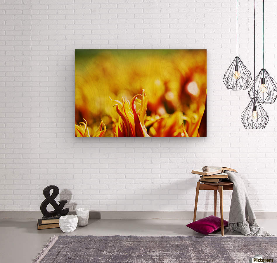 Flower Touch  Wood print