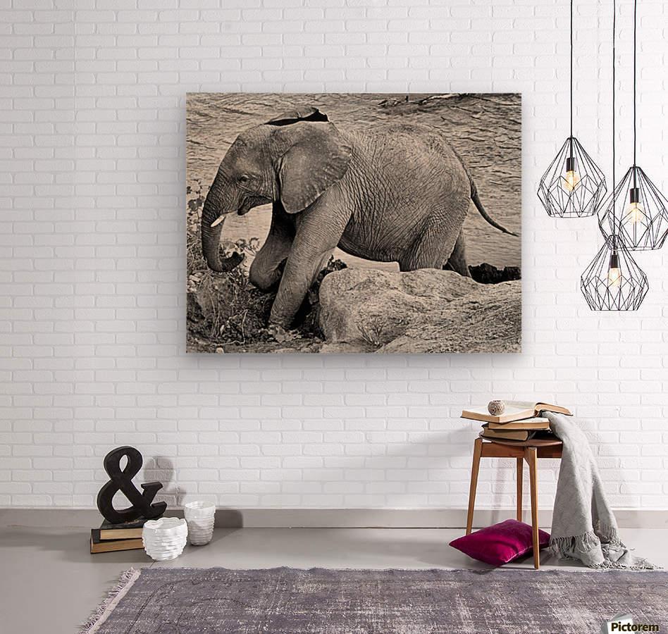 Elephant Baby  Wood print