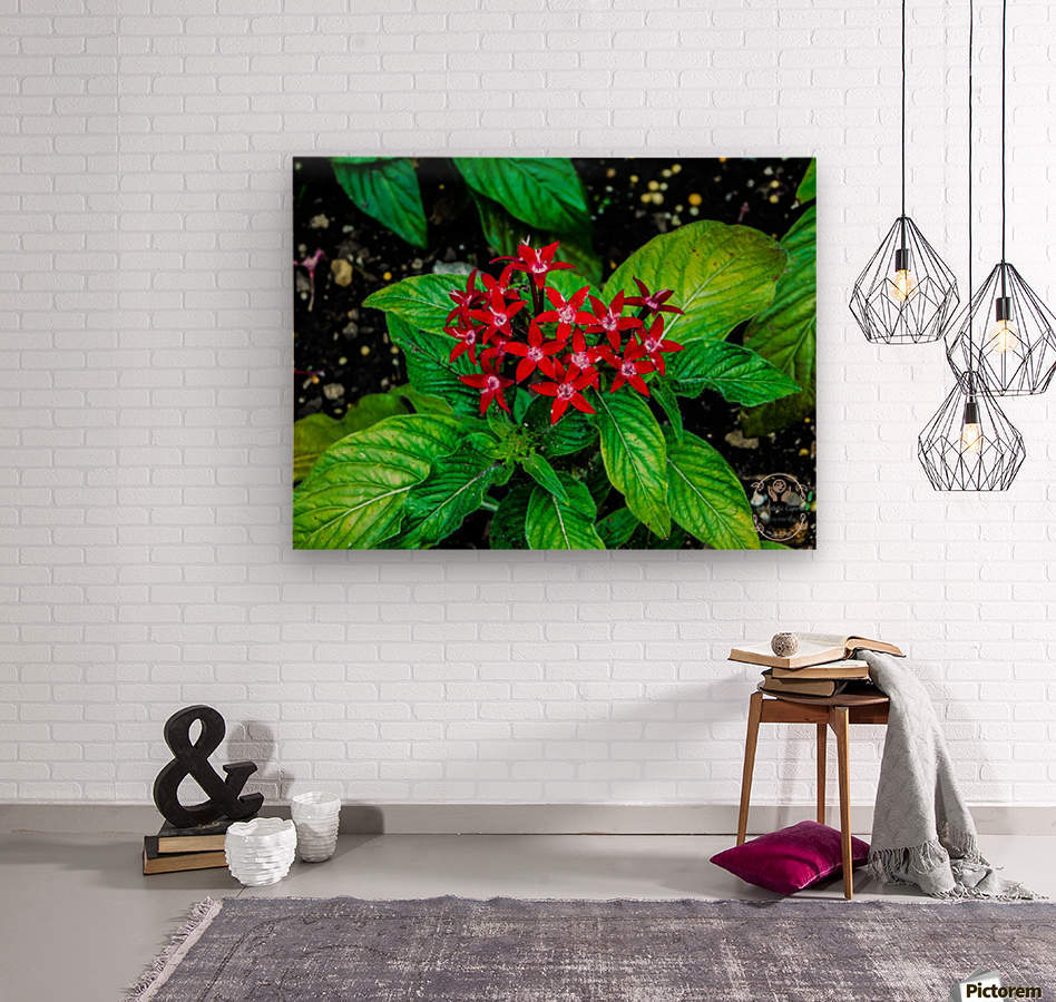 Beauty in the Flower  Wood print