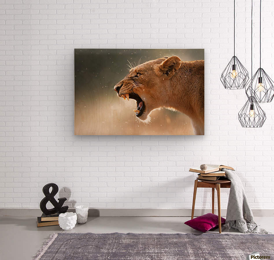 Lioness in the rain  Wood print