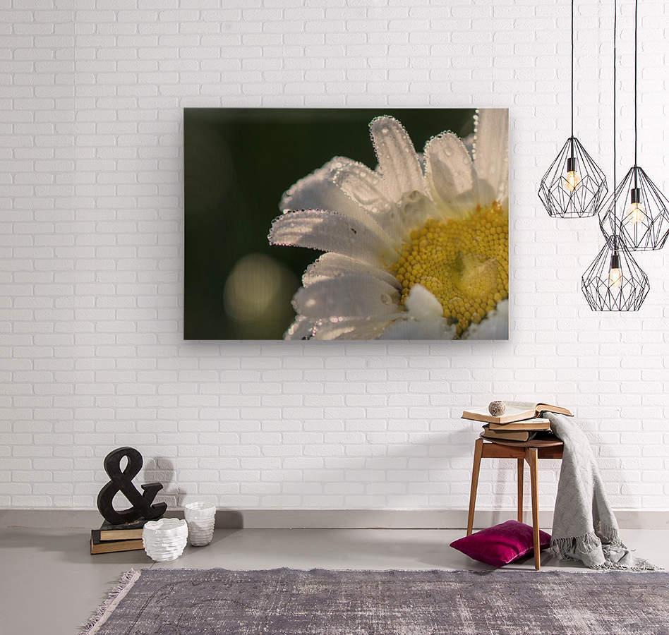 Blancheur de la rosee  Wood print