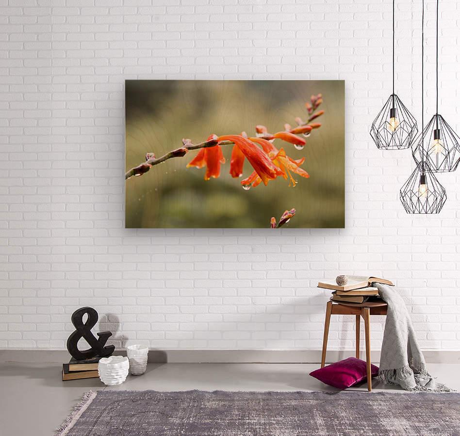 Orange Blooms with droplets  Wood print