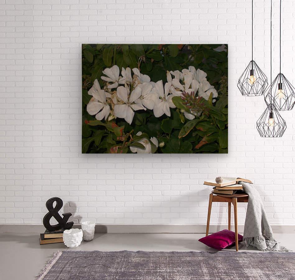 DSCN0570  Wood print