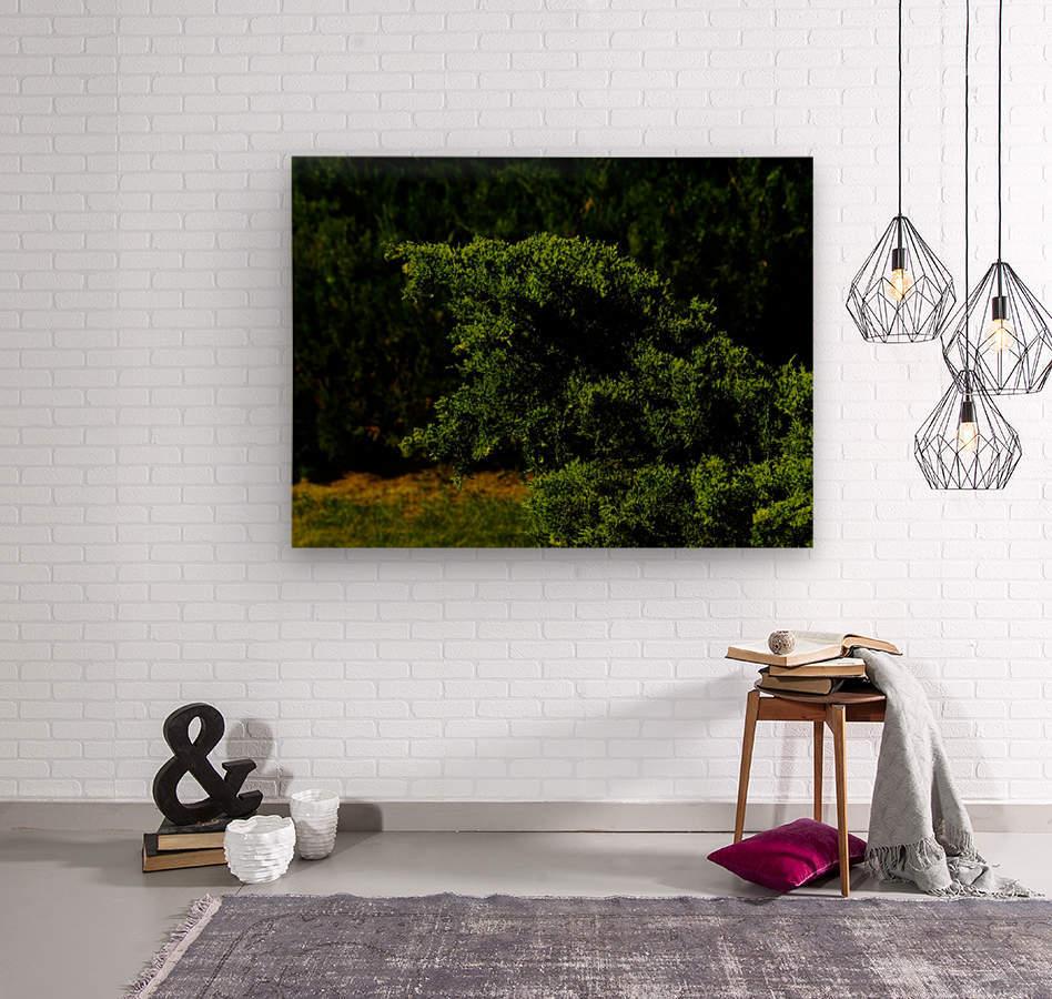 sofn-30401FB1  Wood print