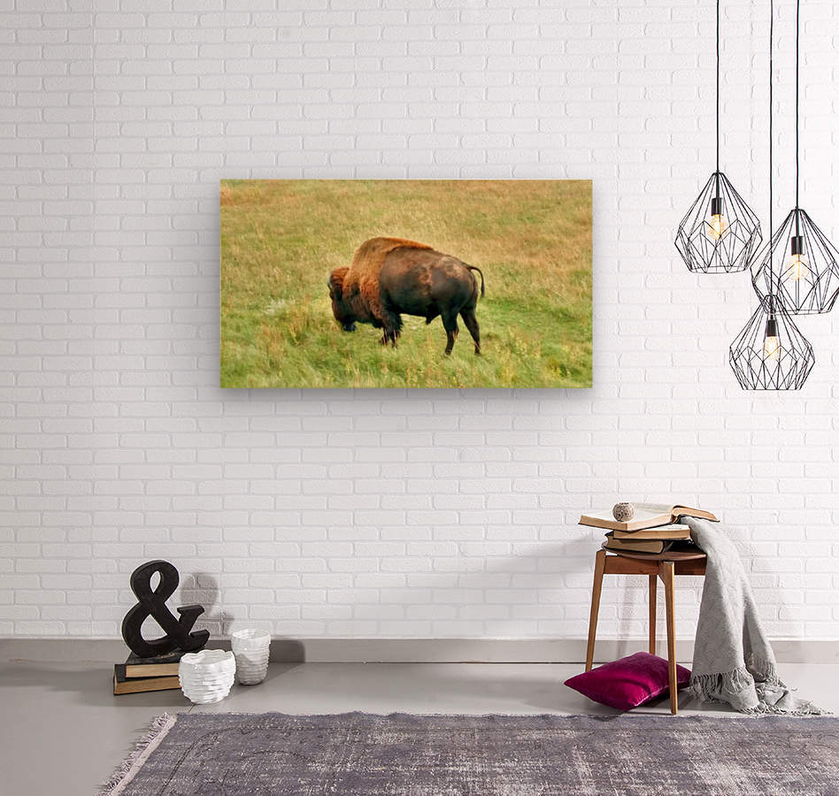 Lone Buffalo Custer State Park  Wood print