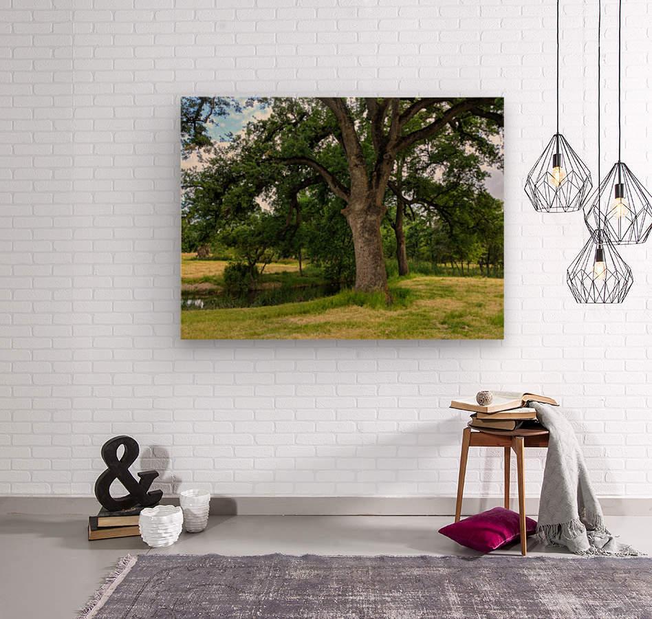 Oak Tree  Wood print