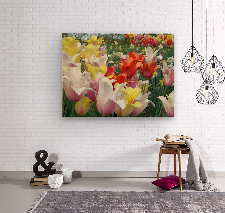 Beautiful Tulip Garden Photograph  Wood print