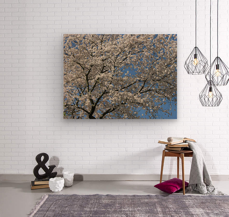 White Spring Blossoms Photograph  Wood print