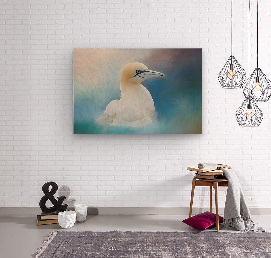 Northern Gannet ver2  Wood print
