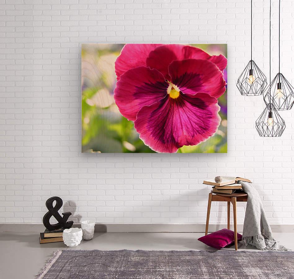 Pink Pansy Photograph  Wood print