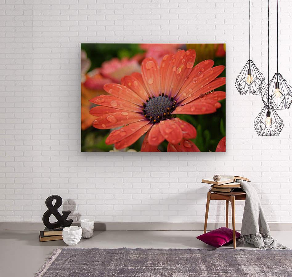 Orange Flower Covered In Rain Drops Photograph  Wood print