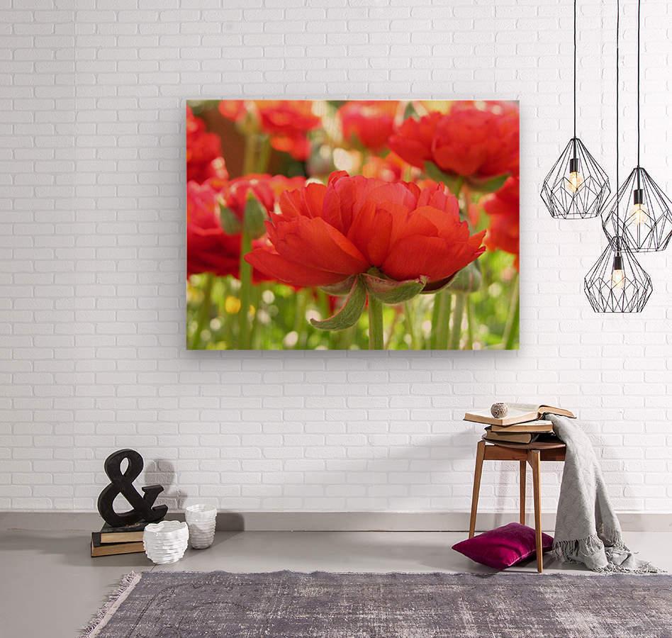 Red Rose Garden Photograph  Wood print