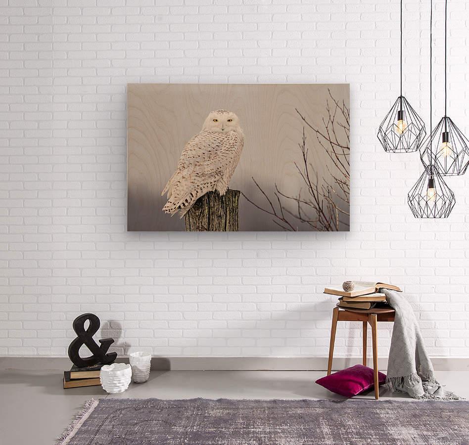 Snowy Owl on the Fence  Wood print