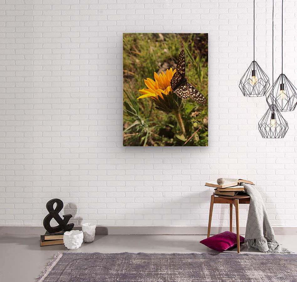 Butterfly on Arrowleaf   Wood print