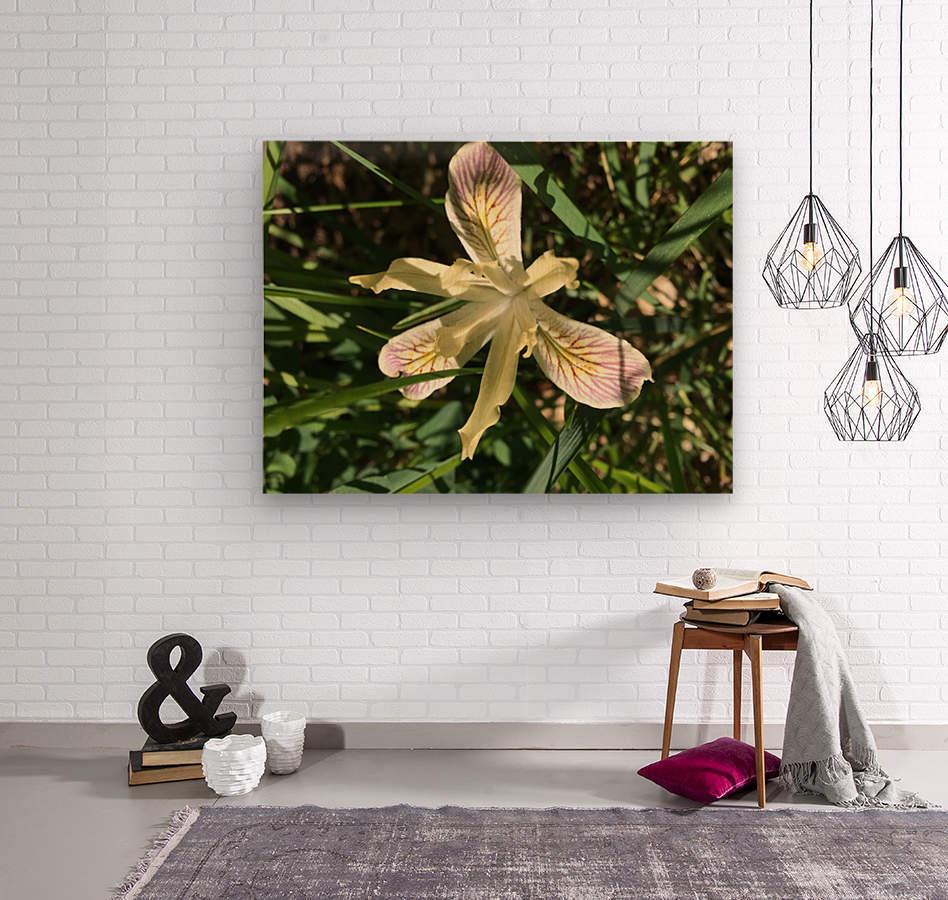 Siskiyou Iris  Wood print