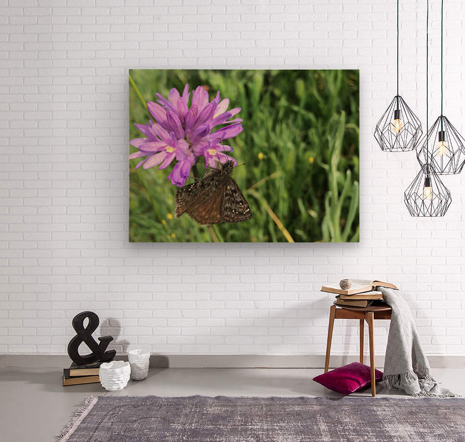 Butterfly on Wildflower  Wood print