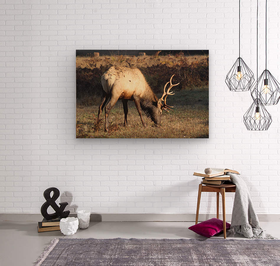 Roosevelt Elk  Wood print