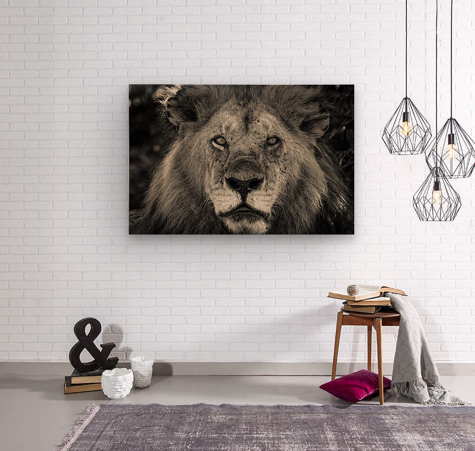 The King of South Africa - 1  Wood print