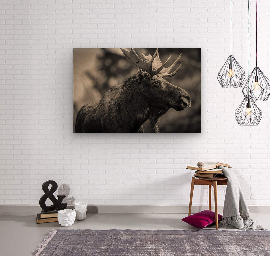 Moose Portrait - 2  Wood print