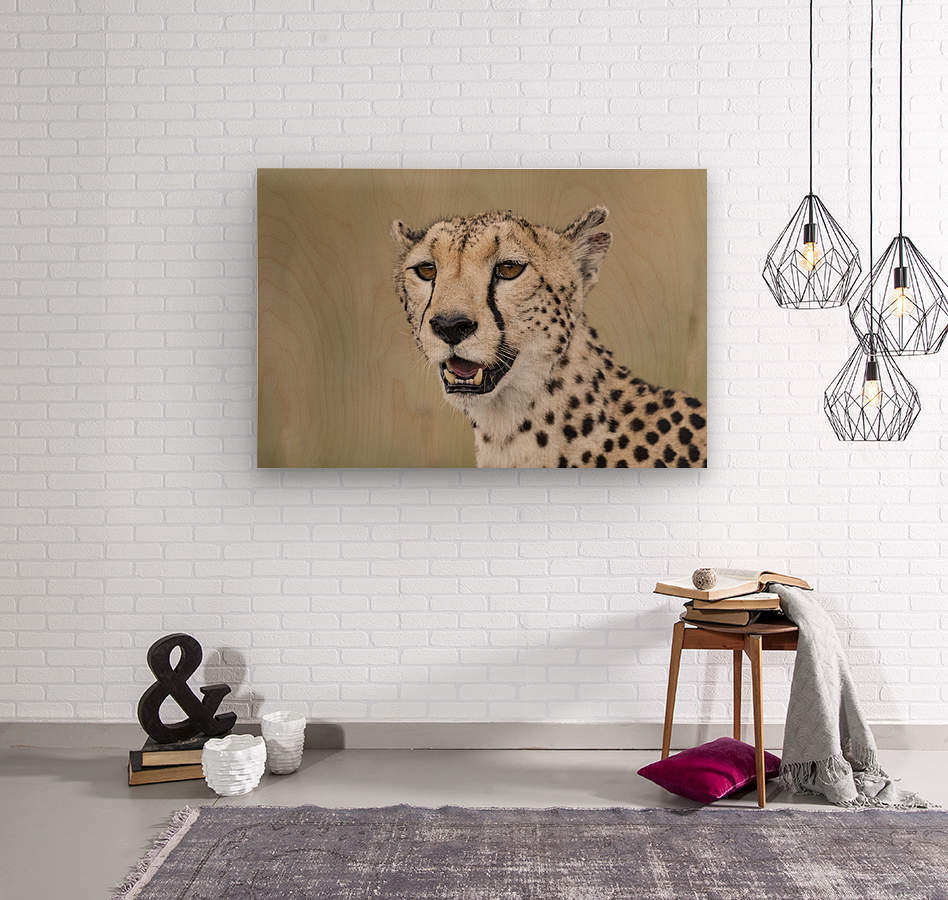 Cheetah Portrait by www.jadupontphoto.com  Wood print