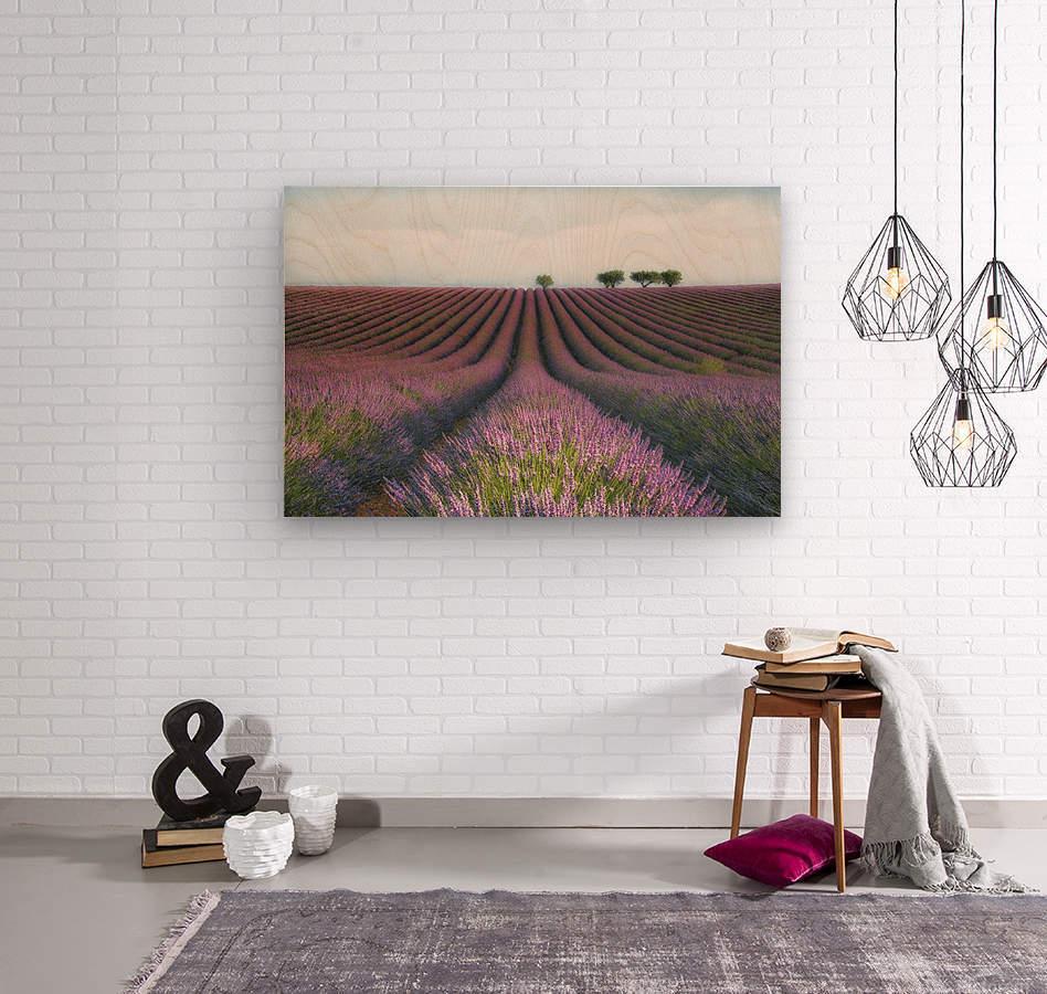 Velours de Lavender  Wood print