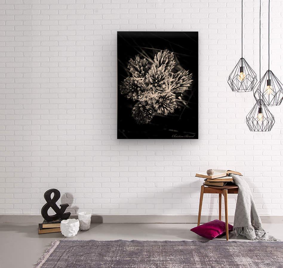 Black beauty   Impression sur bois