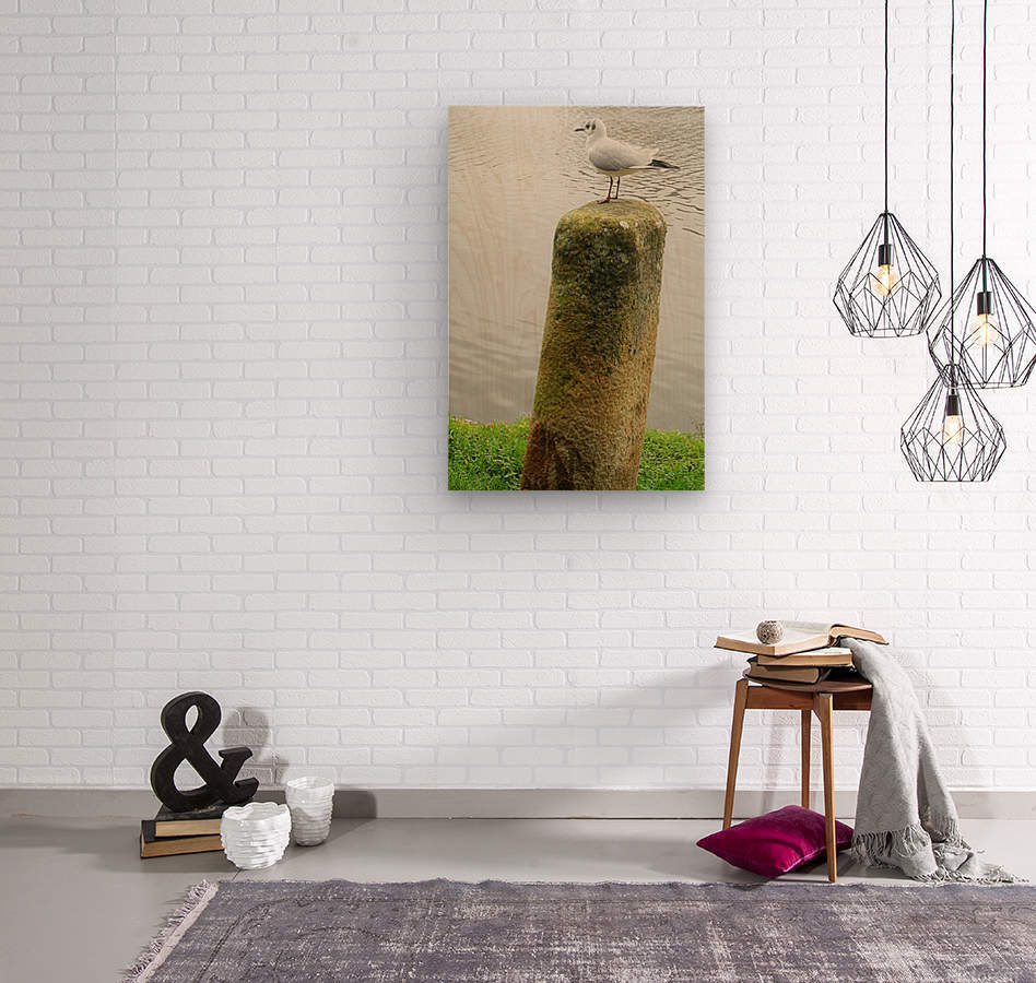 Mouette  Wood print