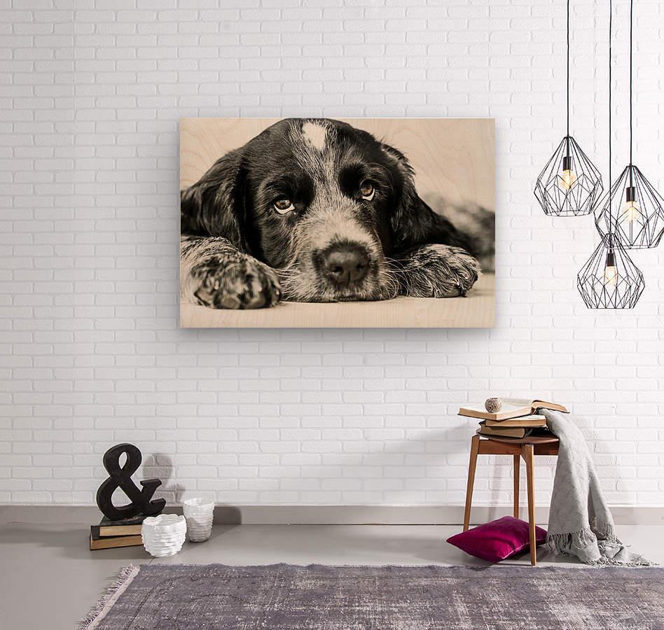 Cute Cocker Spaniel Puppy  Wood print